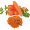 Carrot Powder - VINAYAK INGREDIENTS