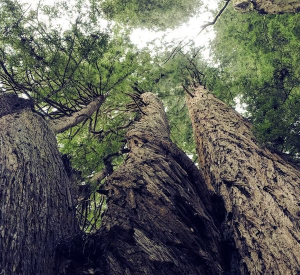 Dustin's Internet Community Road Trip: In the Bay Area, What Redwoods Can Teach Us About the Internet Thumbnail