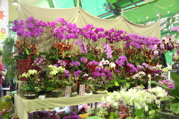 Orchids in Taipei, Taiwan