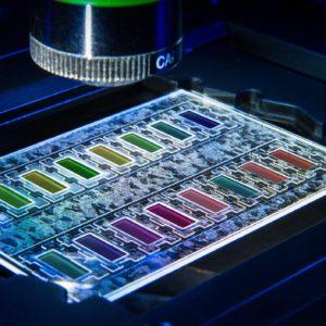Miniaturisierter Wachstumschip zum schnellen Erkennen bakterieller Resistenzen. Bislang dauert die Untersuchung auf Antibiotikaresistenzen mehrere Tage. Fraunhofer- Forscher haben ein modulares Komplettsystem entwickelt, mit dem sich die Zeitspanne auf neun Stunden verkürzen lässt.