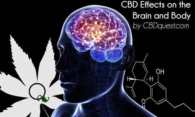 How does CBD affect the brain and body?