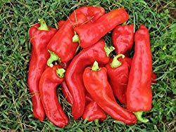 a pile of Aconcagua Peppers sitting on the grass