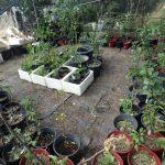 chestnut farm shade hosue plants