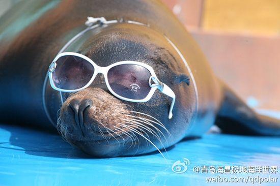 青岛极地海洋世界的海豹(图:@青岛海昌极地海洋世界)
