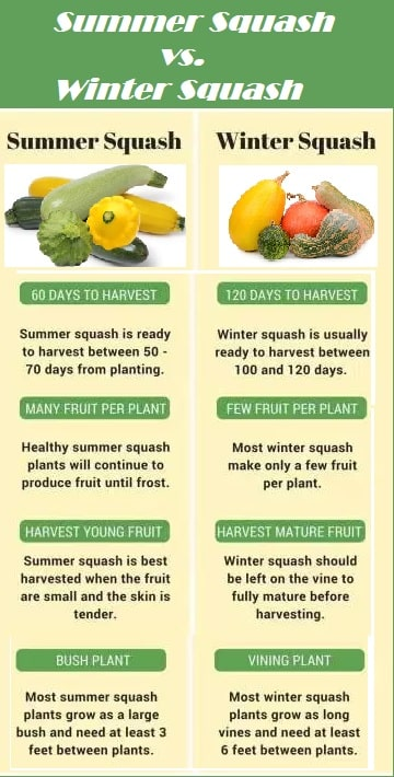 chart attributes summer and winter squash