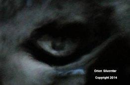 Orion-Silverstar-Eye-Image-ITC