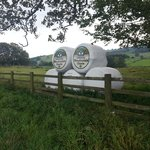 Wensley Dale cheese