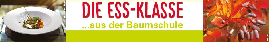 Logo-lang-Blankobalken4