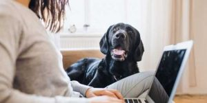 Tips for Caring for your Pet While Working from Home