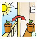 germinate-cannabis-seeds-8
