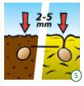 germinate-cannabis-seeds-5