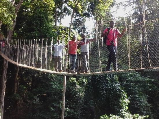 Bonso Arboretum: Top 5 Tourist Site in the Eastern Region of Ghana