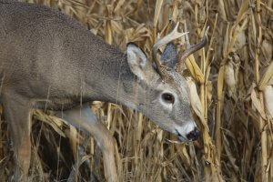 buy hunting land for sale in wisconsin