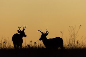 hunting land for sale wisconsin