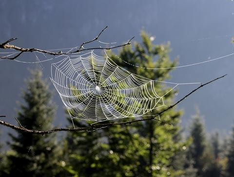 natural-spider-web